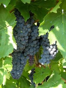 Vini tipici del Trentino Alto Adige